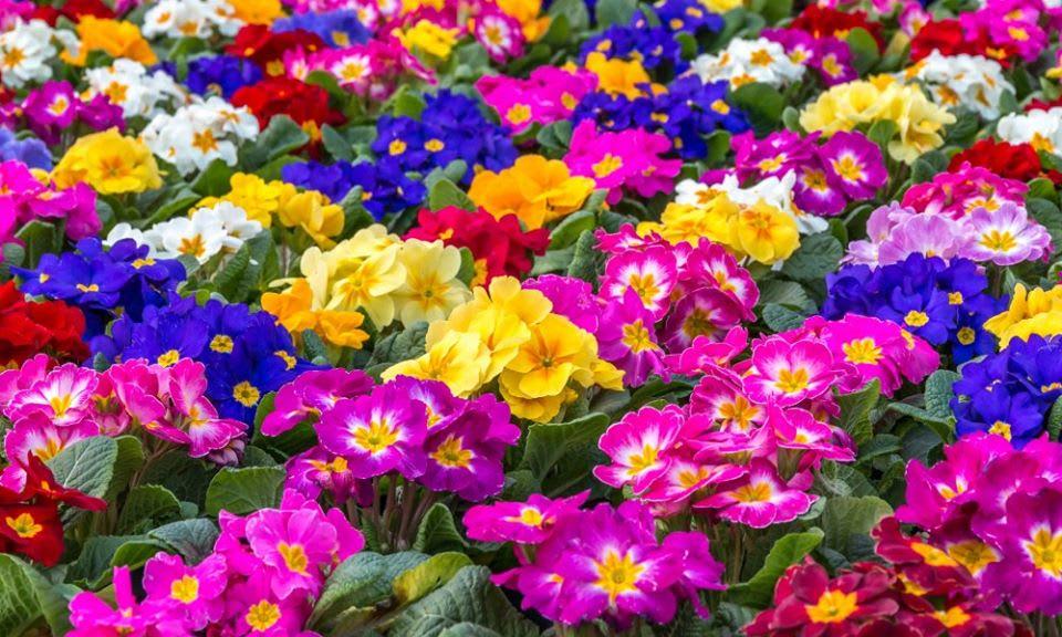 gardening express flowers