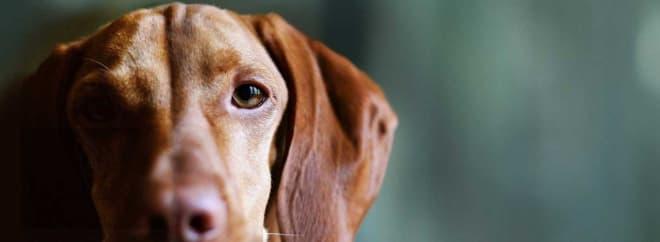 John Lewis Pet Insurance Netmums Image