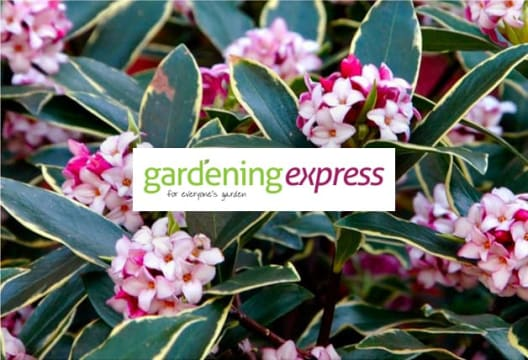 Save on Plants with up to £30 Off at Gardening Express